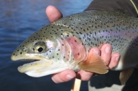 Fishing Report for March 15, 2014
